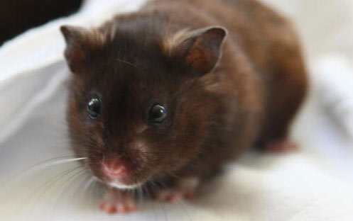 Scared Hamster